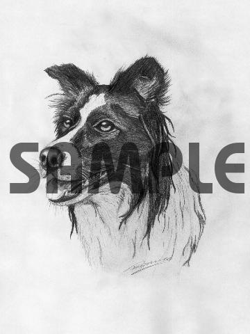 Product picture BORDER COLLIE dog pencil drawing