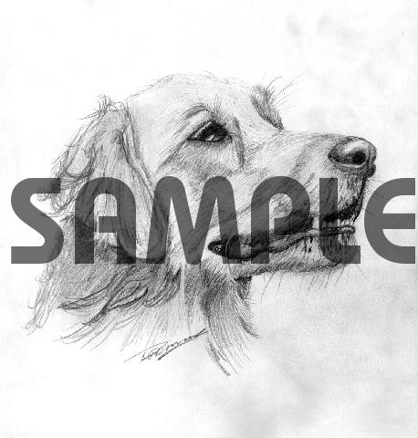 Product picture GOLDEN RETRIEVER dog pencil drawing